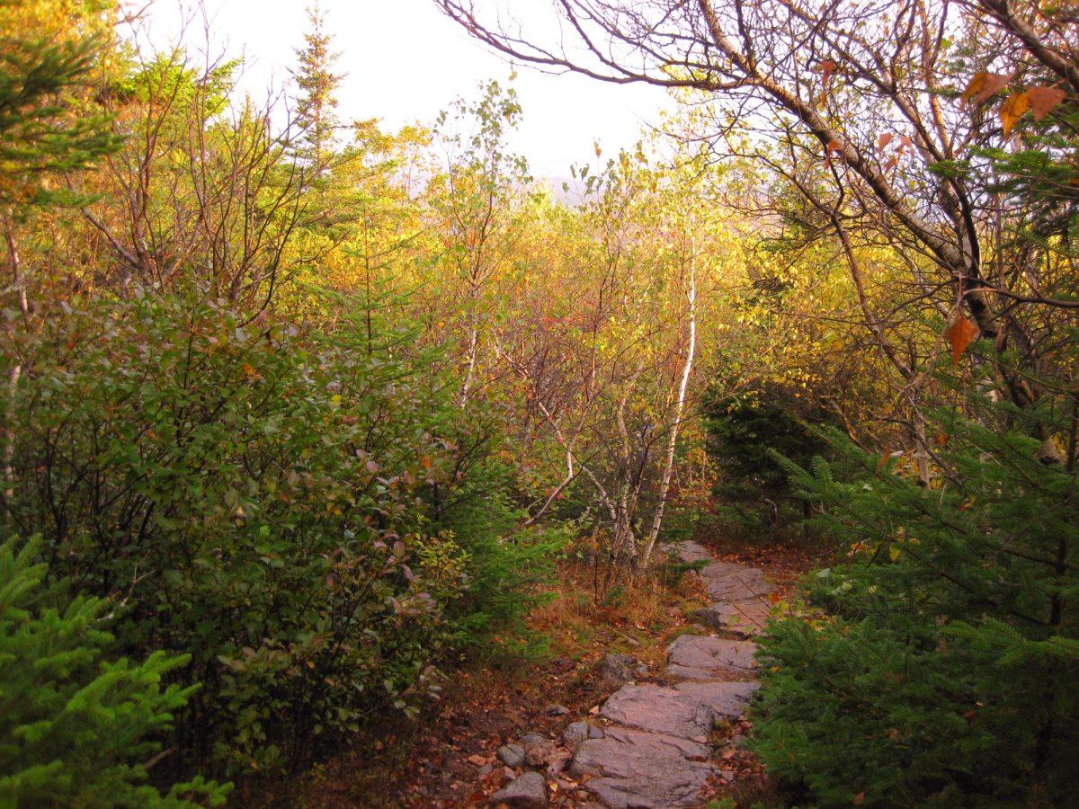 Cadillac Mountain North Ridge Trail